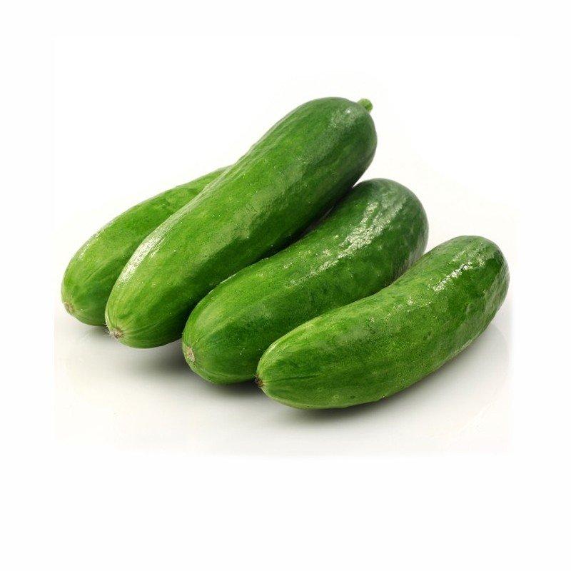 Field Cucumber